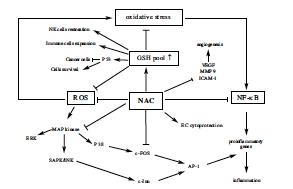 Cơ chế tác dụng của N-acetylcysteine (NAC)